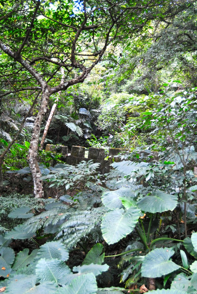 Jungle Path, Lion Head Mountain