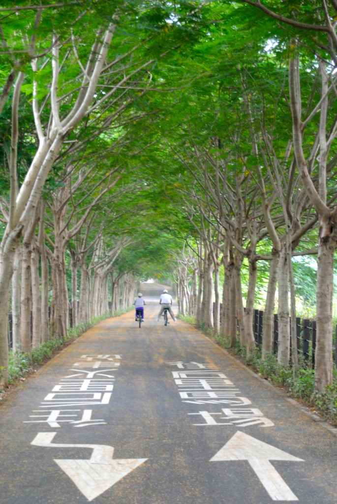 Bike Path During October In Taiwan