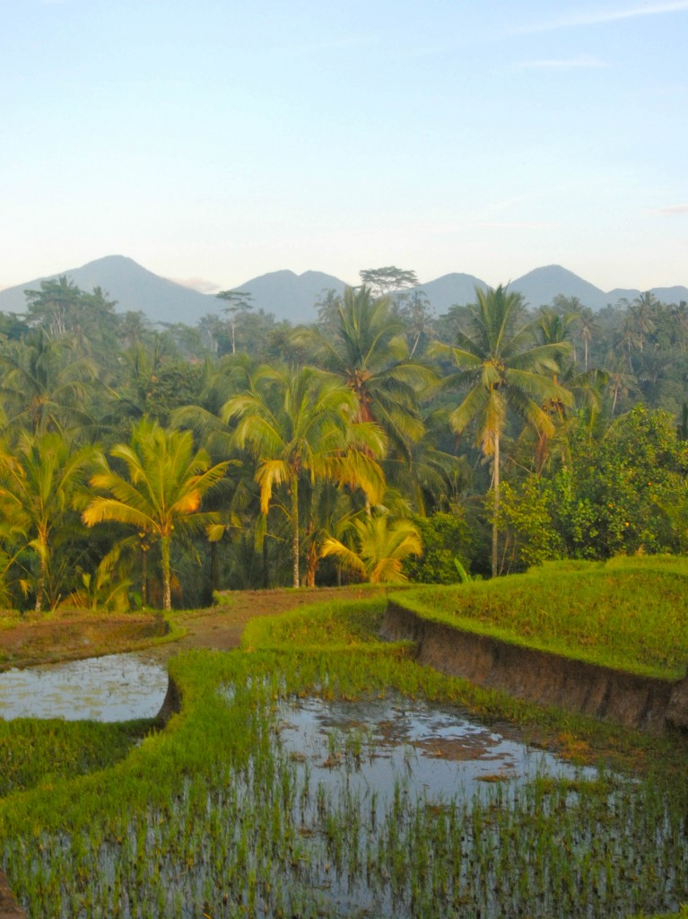 View from our Homestay apartment, Ubud, Bali