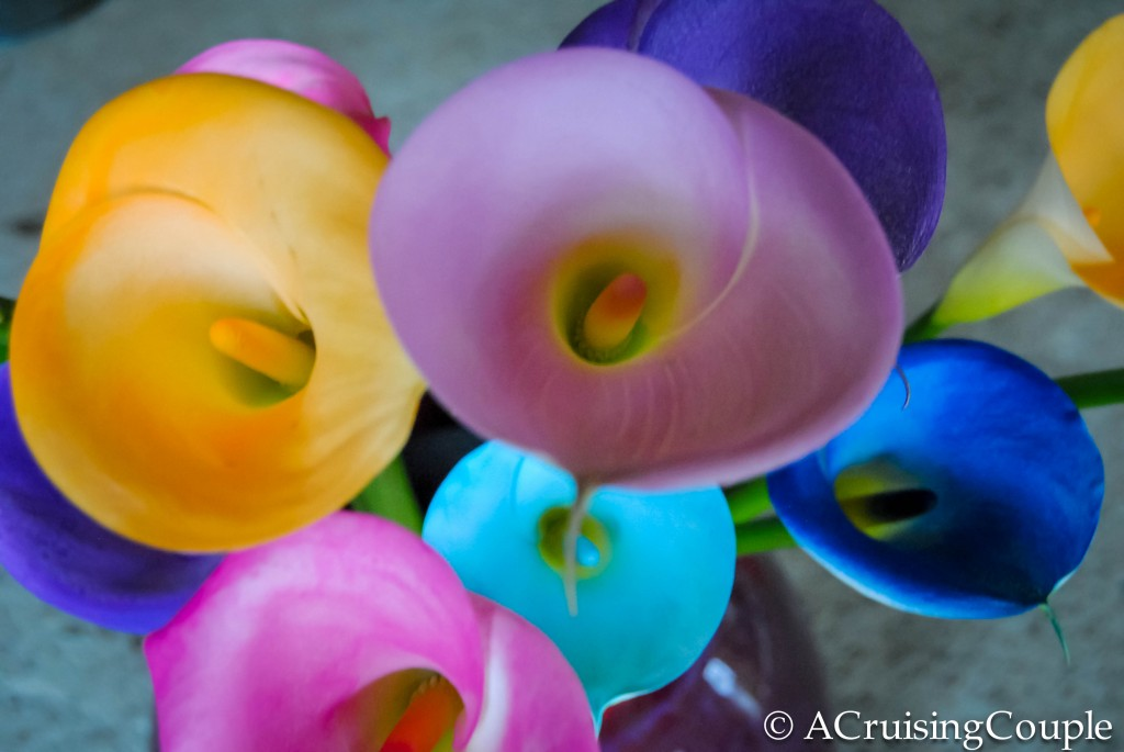 Colored Calla Lily