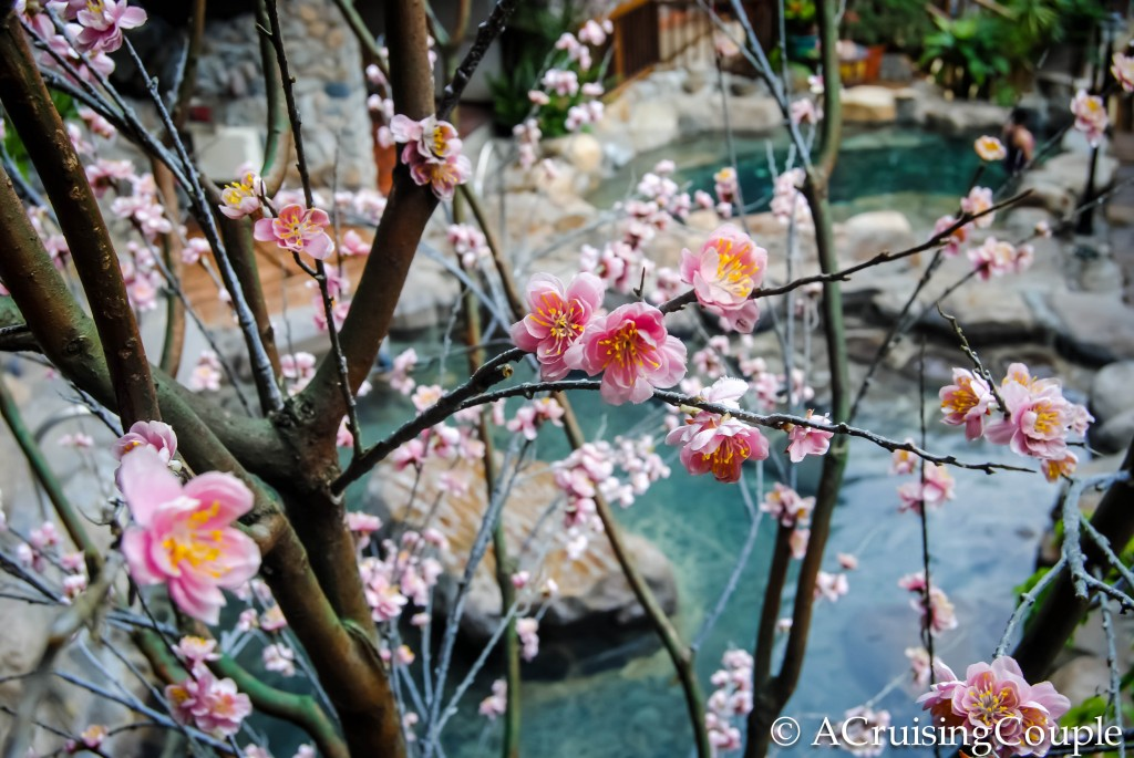 Dragon Valley Hotel Hot Springs Taichung County Flowers