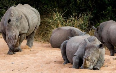 How Saving #JustOneRhino Could Win You A Dream Vacation Of A Lifetime