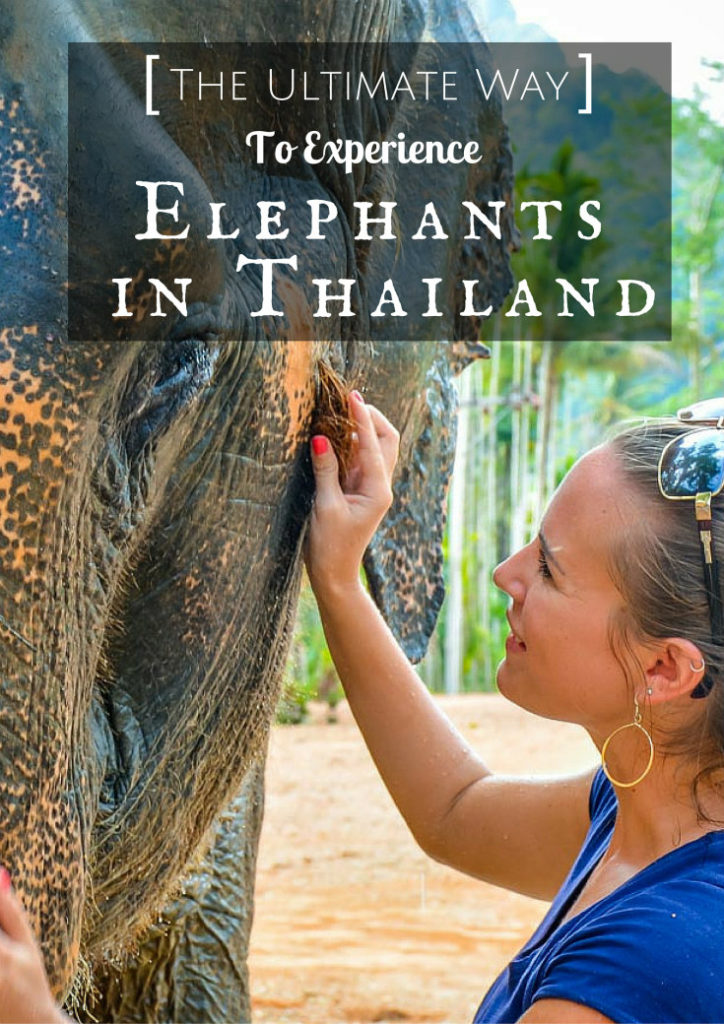 The Ultimate Way To Experience Elephants In Thailand