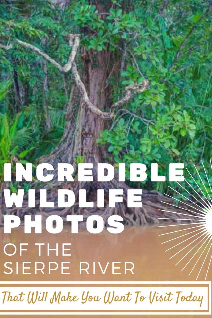 amazing wildlife photos of the sierpe river that will make you want to visit today