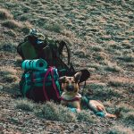 How to Care for Pets that Travel with You