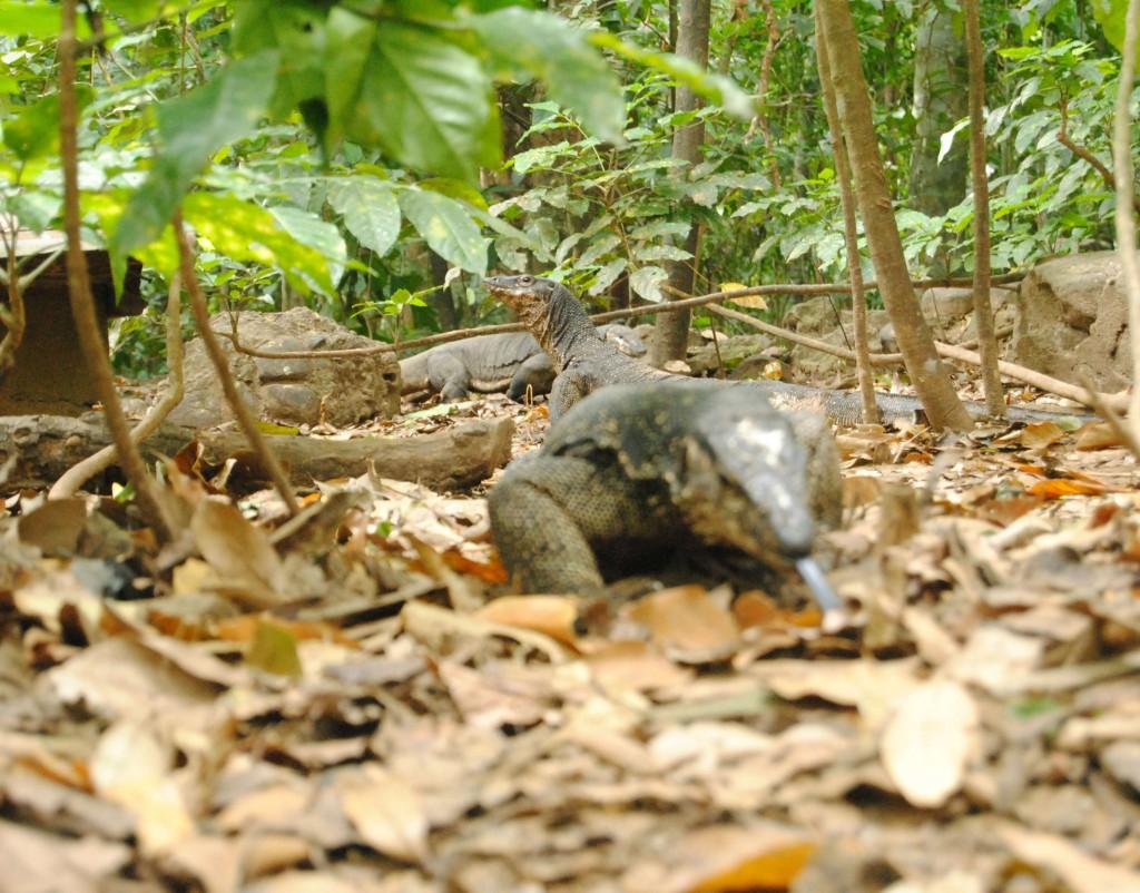 Lizards, Underground River