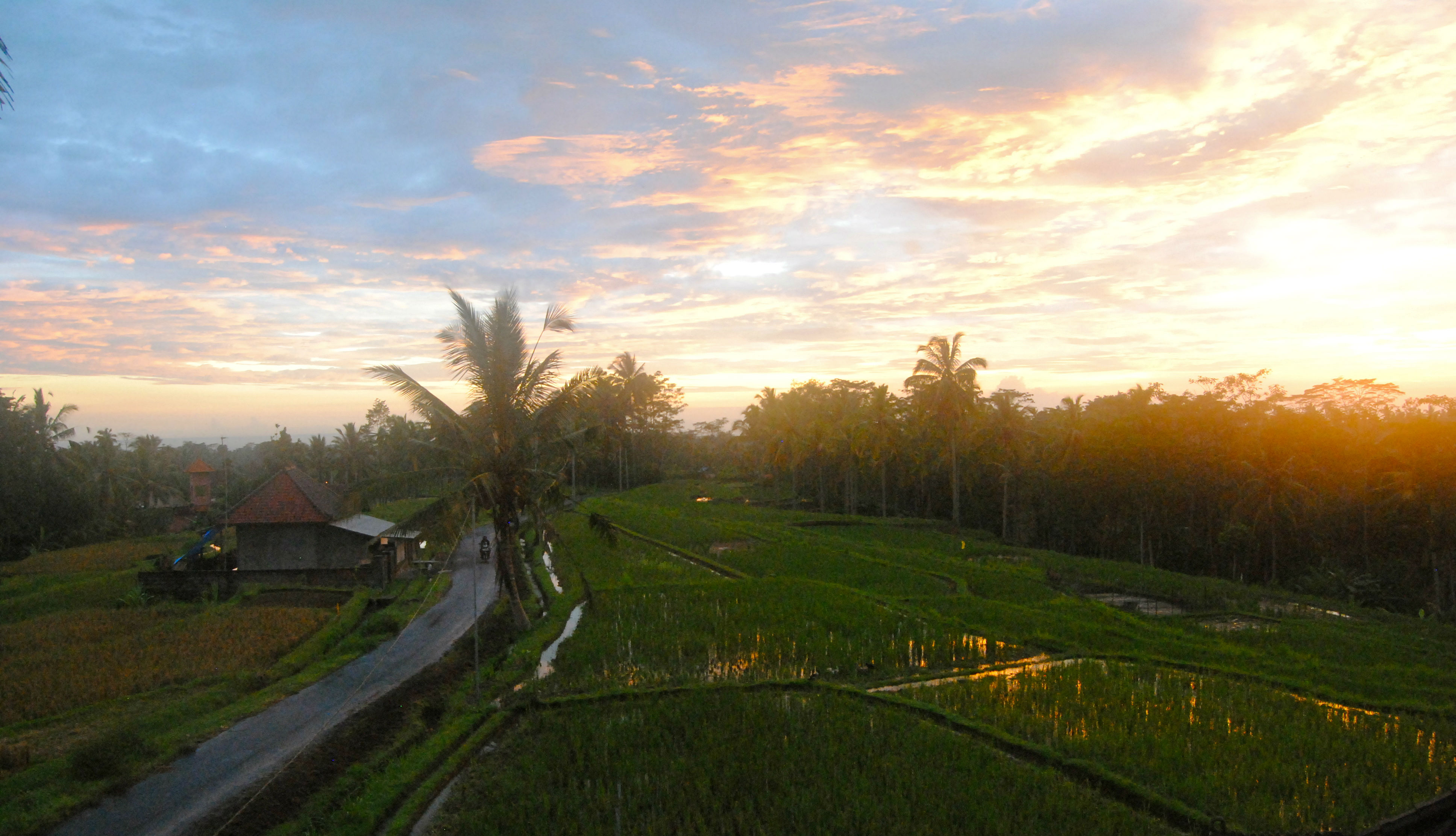 Ubud, Bali: More than just 'Eat, Pray, Love'