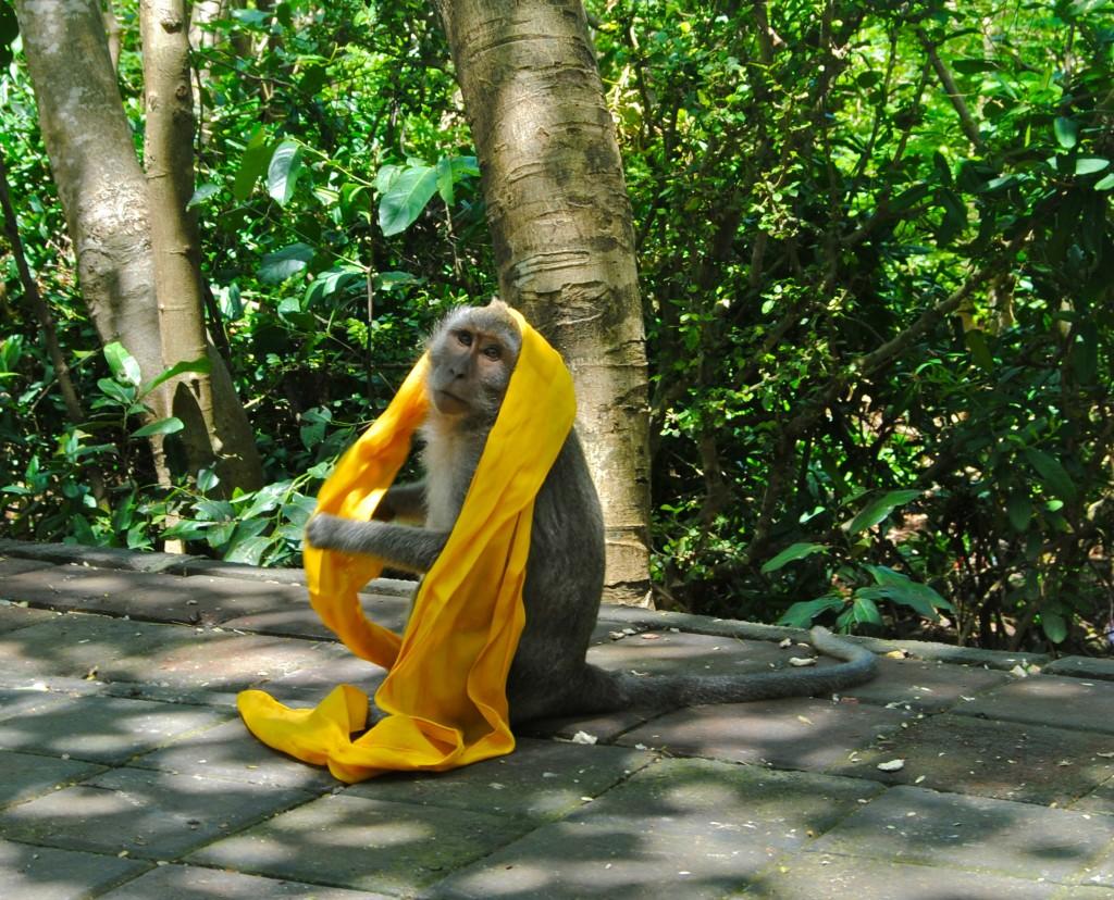 monkey, Bali