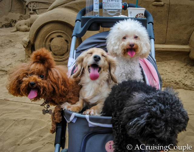Cute Dogs in Stroller Featured