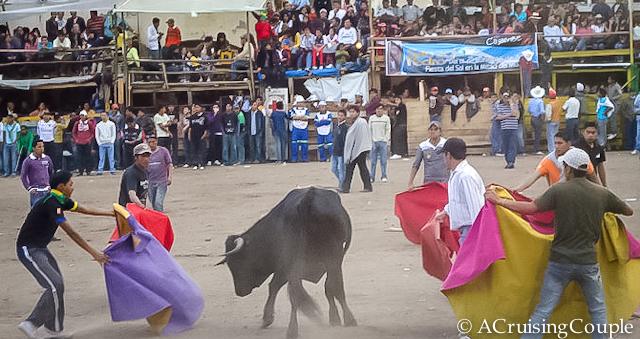 Bull fight Ecuador