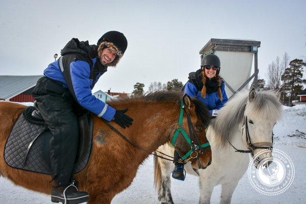 A Moose Safari Via Icelandic Horse - A Cruising Couple Icelandic Horseback Riding