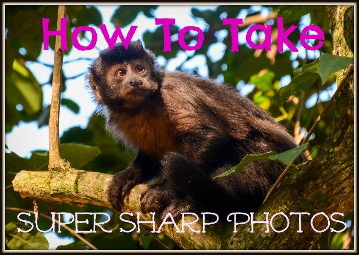 How to Take Super Sharp Photos