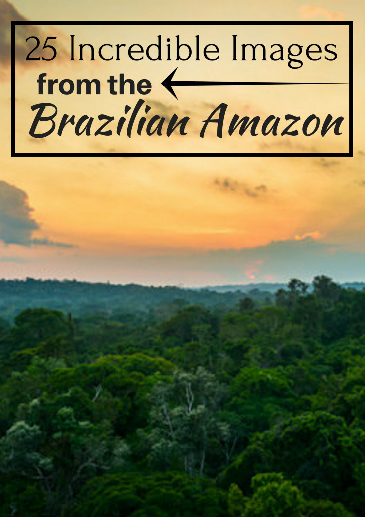 25 Incredible Images Brazilian Amazon