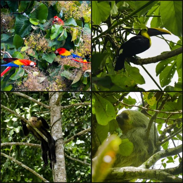 Wildlife on the Osa