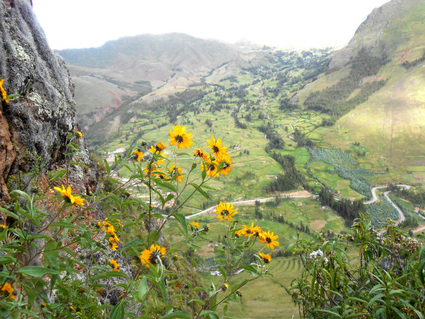 The Amazing Ruins of Pisac in Peru