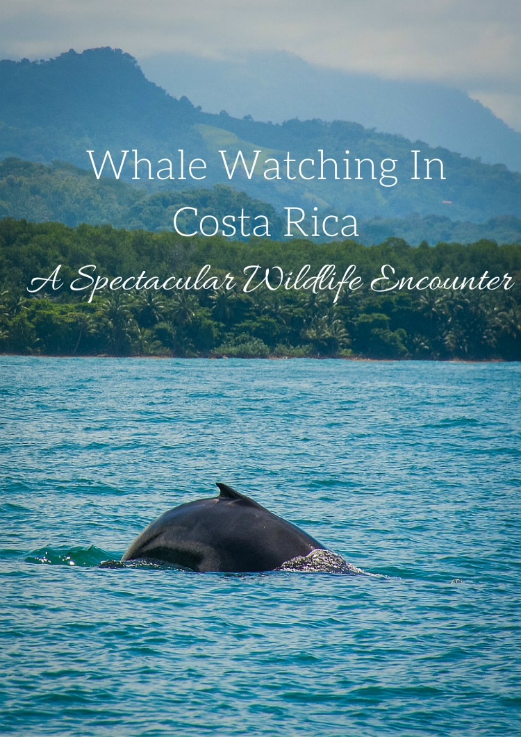 Whale Watching Costa Rica Spectacular Wildlife