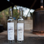 An Inside Look At The Art Of Making Mezcal—Oaxaca, Mexico