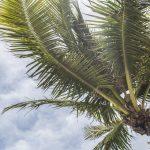 A guide to exploring Florida as a couple