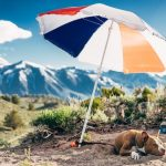 Going Hiking With Your Pet? 5 Tips That Will Come Handy